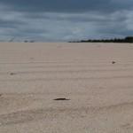 oregon in het zand